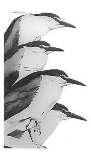 Waterbirds Herons