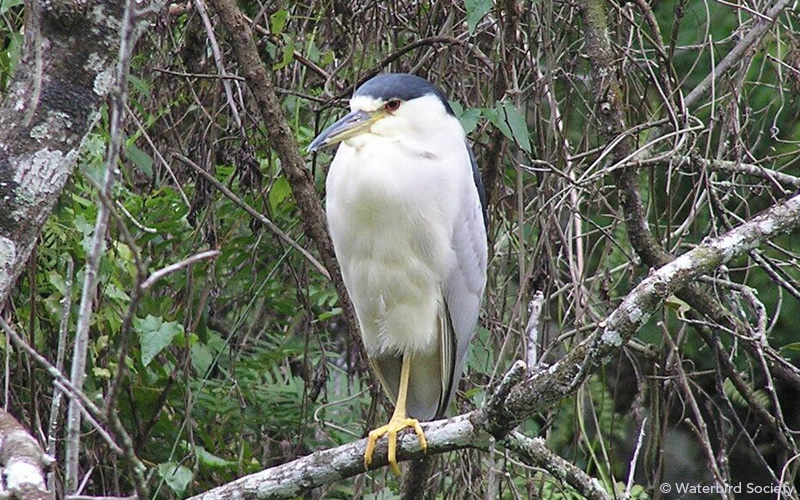 heron-on-branch-wbs